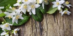 JASMINE FRAGRANCE | PARABEN FREE | PHTHALATE FREE | SOAP AND CANDLE COMPATIBLE